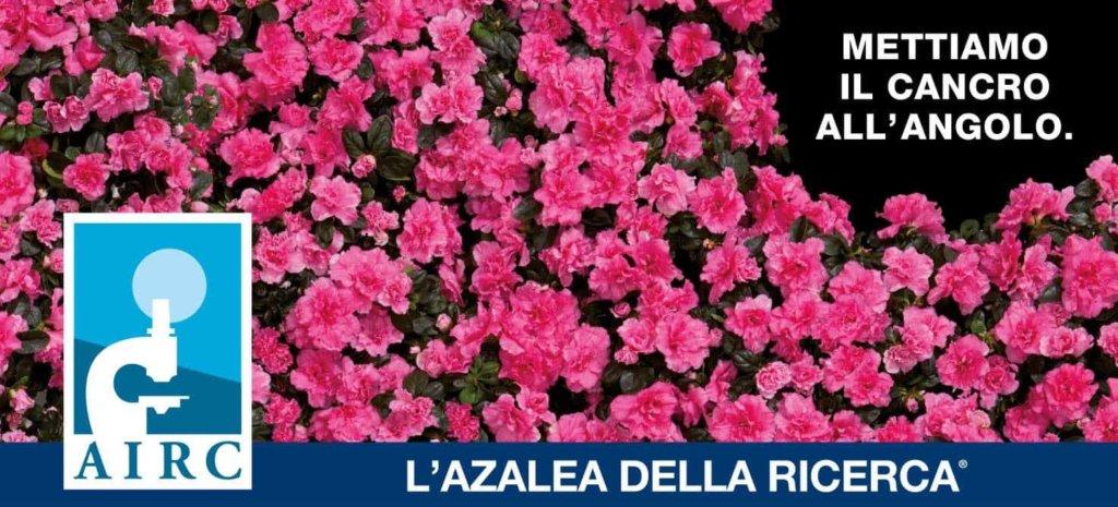 A San Nicolò si terrà la manifestazione Azalea della Ricerca di AIRC