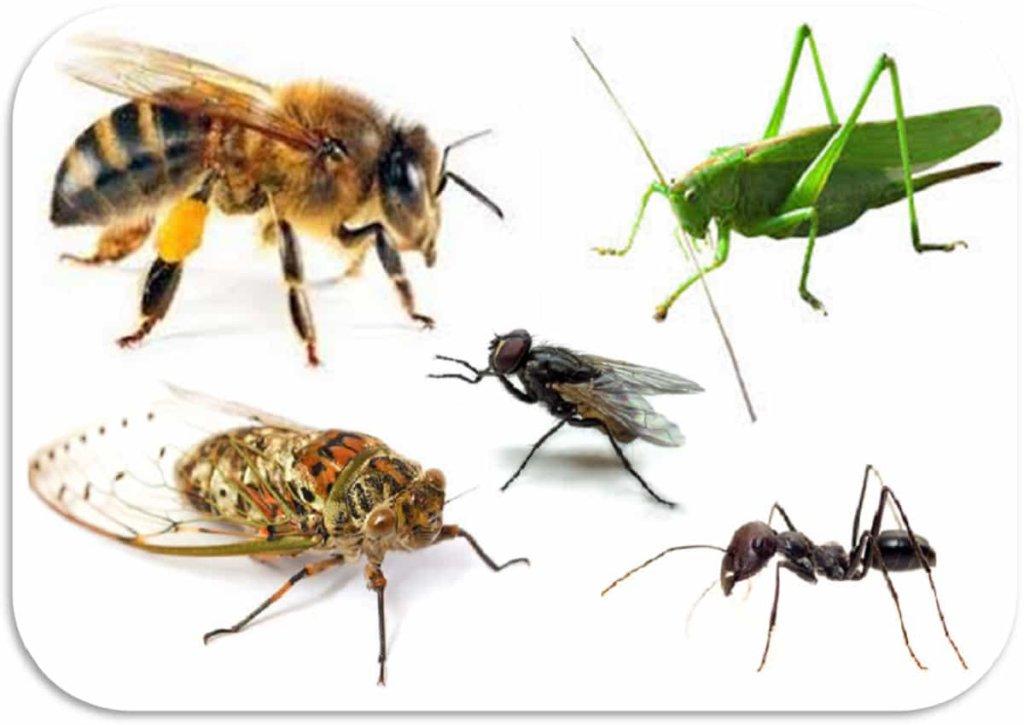 insetti-min